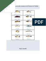 Las Especies de peces más comunes en la Provincia de Córdoba