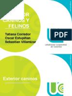 EXTERIOR-DE-CANINOS-Y-FELINOSs