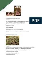 fichas tecnicas suculentas.pdf