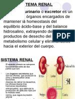 sistemarenal