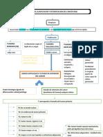 Mapa conceptual cancer clacificación y estratifacación