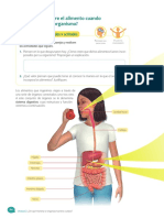 5º básico Sistema Digestivo