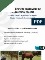 04 ALIMENTACIÓN EN LA INDUSTRIA EQUINA.pdf