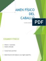 05 EXAMEN FISICO EQUINOS.pdf