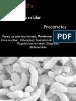 5.- Estructura Celular genetica