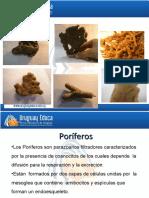 las esponjas [downloaded with UR Browser] (1)