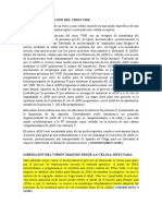CICLO DE REPLICACION DEL VIRUS VHB.docx