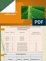 15. CLASE XI Analisis foliar