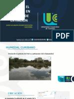 HUMEDAL EL CURÍBANO EN PELIGRO  DE EXTINCIÓN.pptx