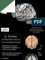 anatomie_et_vascularisation_de_lencéphale.pdf