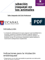 Intubación endotraqueal en pequeños animales.pptx