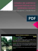 Palmeras en la jardinería Canaria