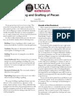 Budding and Grafting of Pecan (UGA)