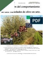Ensayo de distintas variedades de olivo en seto