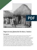 Negros en una plantación de tabaco, Jamaica