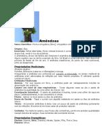 Amêndoas - Amendoeira