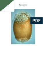 Regnul Fungi(ciuperci)