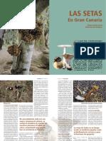 Las_setas_en_Gran_Canaria