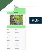 Herniaria glabra.pdf