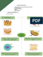 DEBER MORFOFISIOLOGIA I.pdf