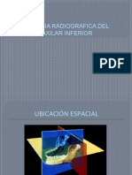 ANATOMIA RADIOGRAFICA DEL MAXILAR INFERIOR