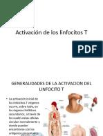 Activación de los linfocitos T