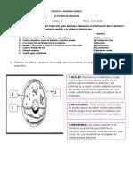 ACTIVIDAD LA CELULA 11-MARGARITA OLMEDO.docx