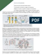 PATOLOGIAS CX DE LOS PULMONES