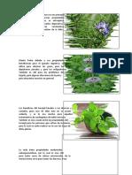 beneficios de plantas medicenales ornamentales y comestibles