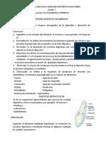 sistema_digestivo_de_animales CIENCIAS #2.pdf