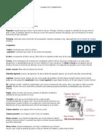 examen fisico segmentario de enfermeria
