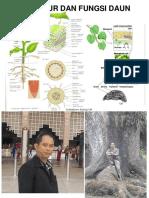 9B Anatomi Daun.pdf