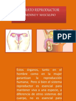 aparato reproductor masculino y femenino.pdf