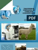 transferencia  embrionaria en camelidos sudamericanos.pptx