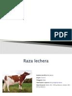 bovinos sistemas