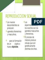 DIapositivas Reproduccion Sexual.pptx