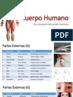Cuerpo Humano etimologías médicas