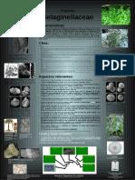 selaginellaceae.pdf