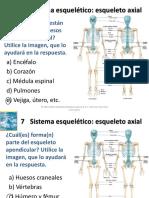 esqueleto axial contestado