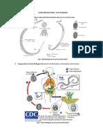 informe 3 parasitologia