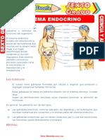 sistema endocrino1.doc