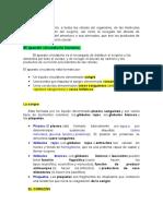 La circulación.docx