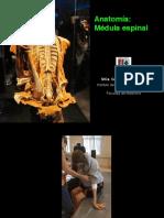 ANATOMIA MEDULA ESPINAL.pdf