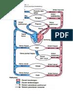 Biologi - Gambar Pembuluh Darah dan Penjelasannya
