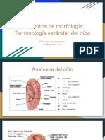 Elementos de morfología de la oreja