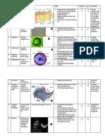 Struktur dan Gambar Sel