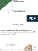 4-MUSCLES DU PIED.pptx