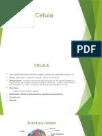 1_celula