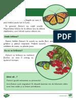 insecte- informații.pdf