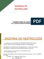 ENZIMAS DE RESTRICCION.pdf